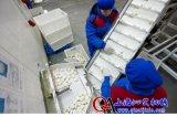 供應冷凍包子水餃輸送機,食品級水餃輸送線