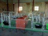 双体母猪产床仔猪欧式床母猪产保一体产床定位栏保育床