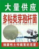 """多粘类芽孢杆菌:耐温性好,质量稳定,""""以菌治菌"""",药效持久;""""药肥兼能"""