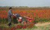 山东厂家直销辣椒收割机 水稻收割机参数报价