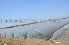 承建温室大棚 蔬菜大棚