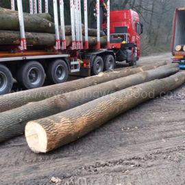 金威木业欧洲材 白蜡木 实木 原木ABC级FSC