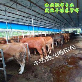 牛场卷帘布 PVC涂塑布抗老化耐腐蚀加厚布