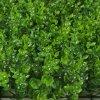 模擬草坪加密米蘭草坪花塑料假草坪人造草皮背景植物牆掛綠化裝飾