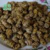 云南野生铁皮石斛枫斗产地多少钱一斤