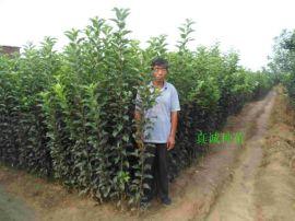 國慶節成熟的蘋果新品種2-18