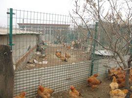 厂家批发养殖包塑铁丝围网 荷兰网护栏 铁丝网 果园围网-河北华久金属