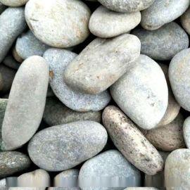 本格供应天然园林卵石 花盆鹅卵石 地坪用卵石