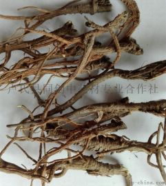 柴胡种子多少钱一斤 柴胡种子一斤 柴胡种子多少钱