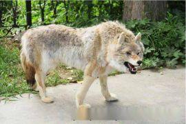 历山仿真狼标本真皮狼模型