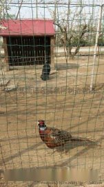 养鸡养鸭用铁丝围网|厂家批发养殖电焊网|养殖  荷兰网|养殖小网孔围网