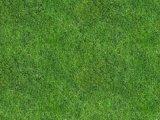 绿化草坪草皮卷,