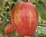 临沂兴旺苗木繁育合作社供应早酥红梨苗