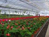 新型温室大棚设计、新疆温室