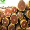 重蚁木实木地板价格 重蚁木地板优缺点 重蚁木地板定制厂家