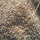 生产加工麦饭石 麦饭石颗粒 麦饭石粉 麦饭石球