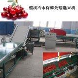 樱桃预冷分选机,樱桃清洗机,中国第一台樱桃产后处理设备生产厂家