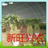新旺兴农养殖大棚建设生产厂家