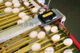 自动集蛋系统鸡蛋计数器