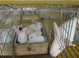 仔母兔笼三层12位无底竹子底兔笼