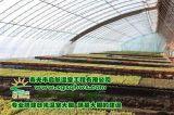 壽光市啓航溫室 全鋼架鋼樑日光溫室