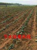 河南信陽熱銷農業灌溉滴灌帶 滴灌配件 PE管道