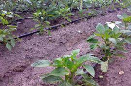 节水灌溉专用滴灌带 各种规格齐全 节水灌溉滴灌带批发价格处理