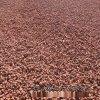 火山石厂家供应 园艺火山岩 红色火山石 造景火山岩