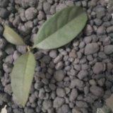 轻质陶粒砂 净水用颗粒状陶粒滤料
