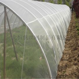 防虫网,柑橘砂糖桔幼苗覆盖防虫网