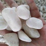 2-3cm抛光白色鹅卵石报价及图片 东营市厂家