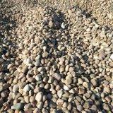 過濾料 鵝卵石批發 泰安市鵝卵石廠家直銷