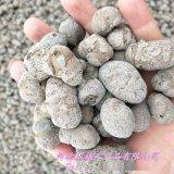 园艺陶粒 无土栽培陶粒 水培陶粒 轻质陶粒