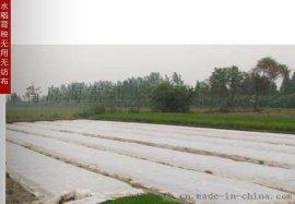 园林无纺布 防寒防霜无纺布植物罩 农业PP布