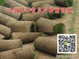 禹城草坪|草皮种植|绿化草坪能长几年