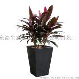 武汉公司植物出租盆栽租赁单位园林