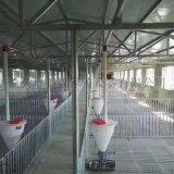 猪舍自动料线 自动上料料线自动化 猪舍自动料线