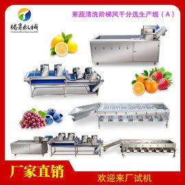 大型果蔬加工生产线(A)