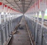 養殖設備豬場料線_母豬產牀母豬飼餵料線