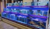 光明海鲜池鱼缸定做白云海鲜池鱼缸制作龙华海鲜池制作