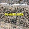 石笼网,四川石笼网,石笼网厂家,防汛石笼网