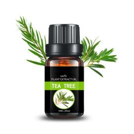 源头工厂直销 澳洲茶树油茶树精油
