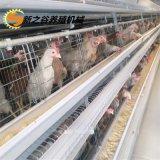 供應全自動清糞機蛋雞養殖設備 新之谷蛋雞設備