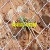 山坡綠化防護網,成都綠化勾花網價格,景區防護網廠家