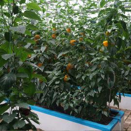 城市现代农业 连栋基质培薄膜温室 蔬菜大棚
