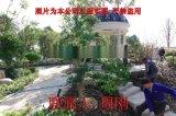 苏州庭院绿化 别墅绿化设计 私家园林绿化 苏州苗圃