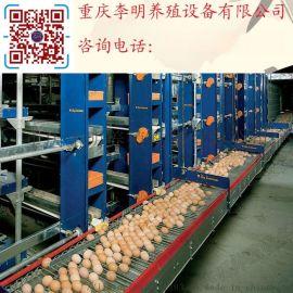 捡蛋机 养殖设备 全自动捡蛋机 集蛋器 捡蛋机配件 蛋鸡捡蛋机
