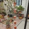 南京市寺廟用排水鏈 純銅雨鏈生產廠家