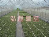新型智能温室 育苗温室大棚 蔬菜大棚建造