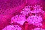 湖北日光型智能气候室植物生长室气候调节实验室建设